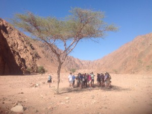 Under the shade of an Acacia tree